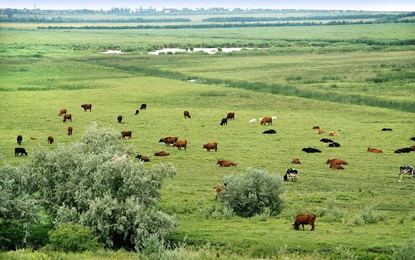 Положение о выпасе скота в селе Чишмикиой